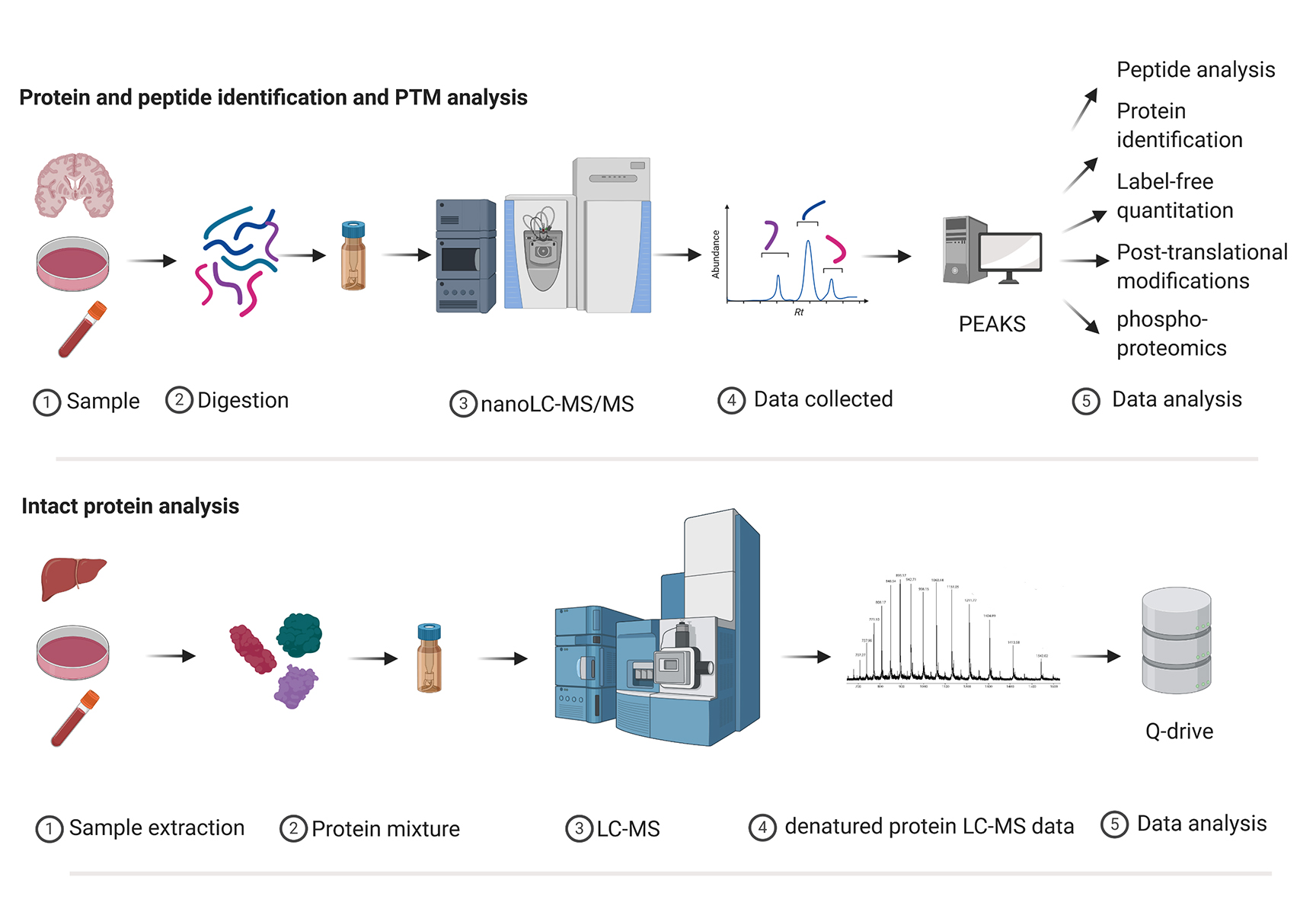 Schematic of the steps for protein or peptide mass spectrometry