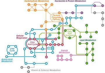 Image of metabolic pathways